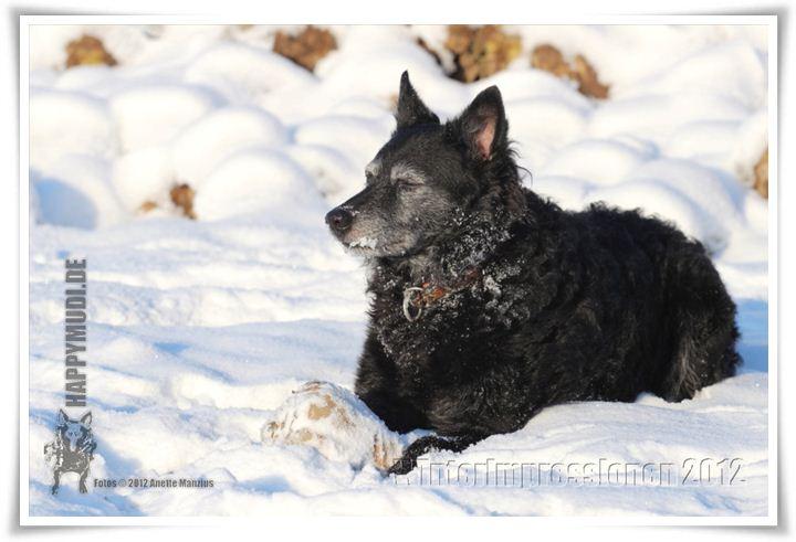 "Bild ""http://happymudi.de/allerlei/galerien/FOTOS-Winterimpressionen-2012/Winterimpression_IMG2012-12-08_032.JPG"""
