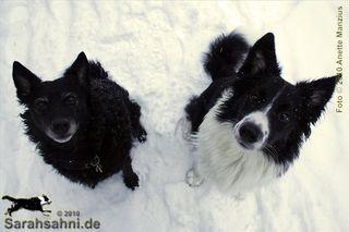 "Bild ""http://happymudi.de/allerlei/galerien/FOTOS_1/Fotos_1_IMG2010-01-09_064_Button-Moppel_Vorsitzen.jpg"""