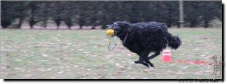 "Bild ""http://happymudi.de/allerlei/galerien/Vorschau-FOTOS-Moppel-Obedience-Training-2012/IMG2012-02-12_197_Moppel.JPG"""