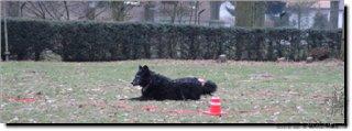 "Bild ""http://happymudi.de/allerlei/galerien/Vorschau-FOTOS-Moppel-Obedience-Training-2012/IMG2012-02-12_210_Moppel.JPG"""